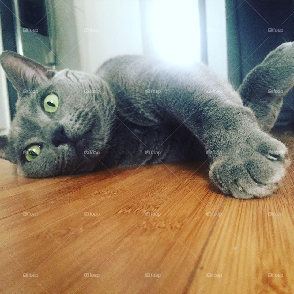 Pet, Domestic, Cat, Cute, Family