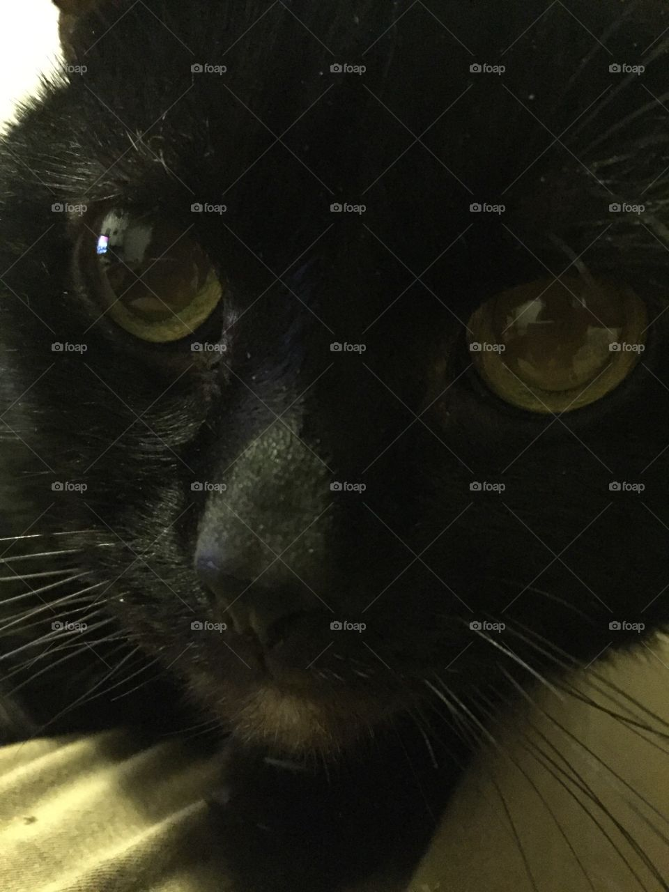 Black cat love Halloween