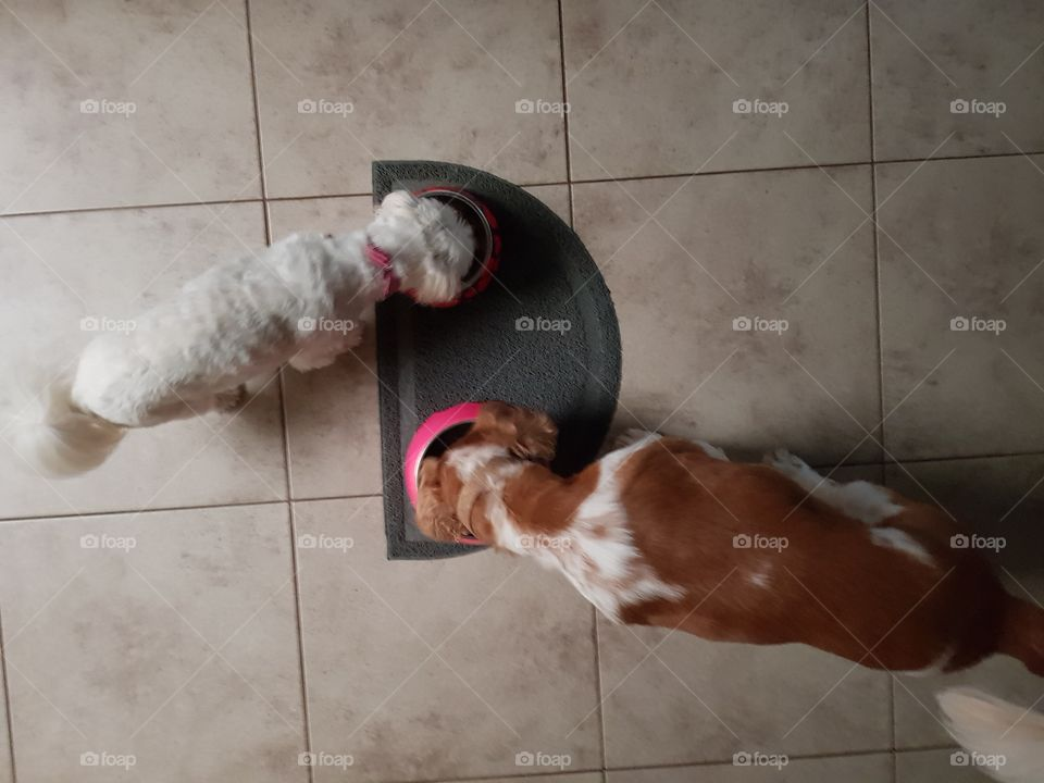 two dogs eating a meal