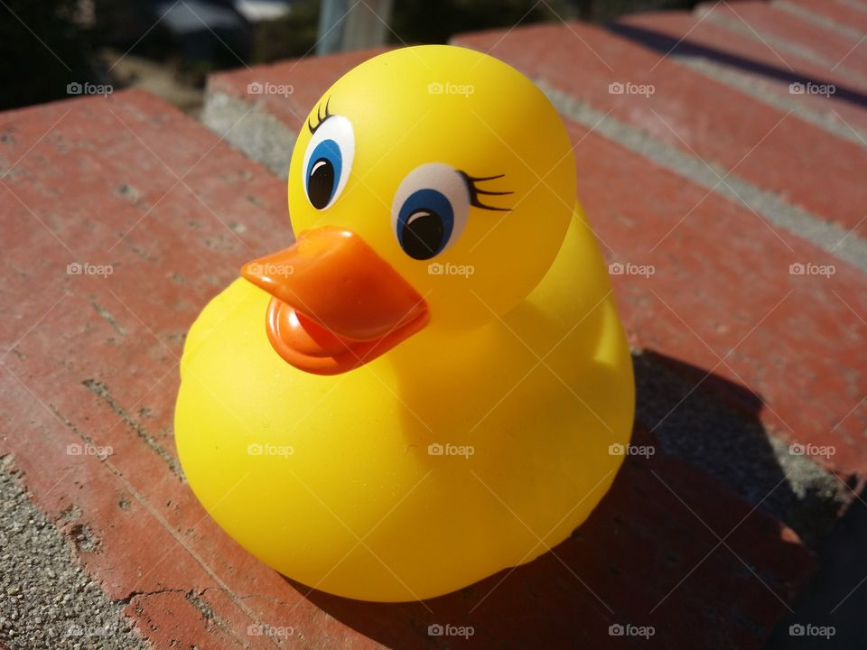 Rubber duck is waiting to swim