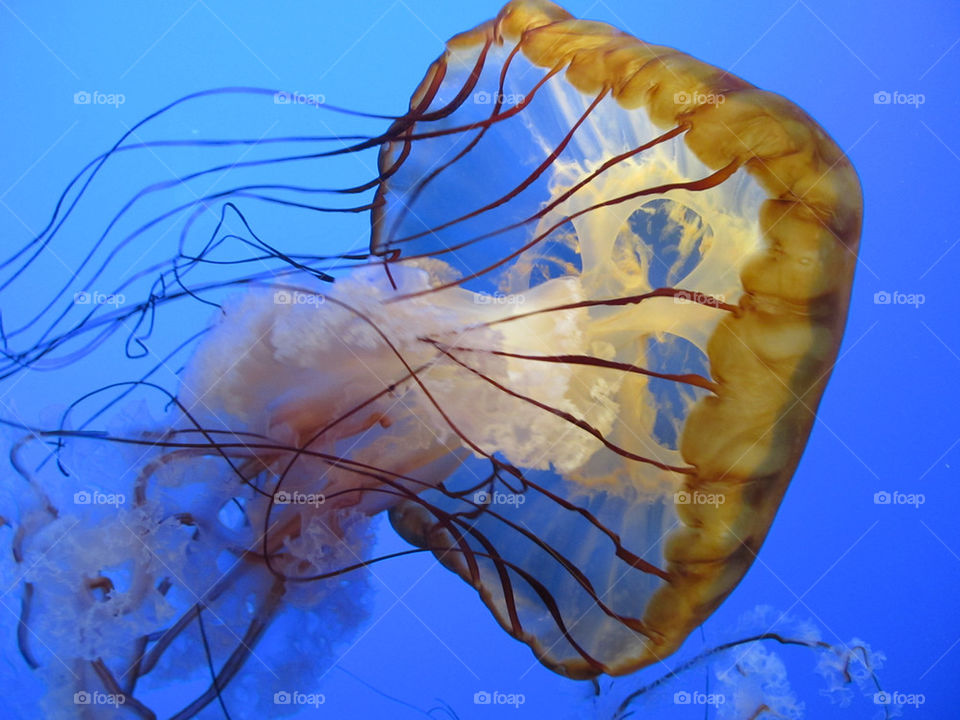 sea aquarium jellyfish floating by _maximus_