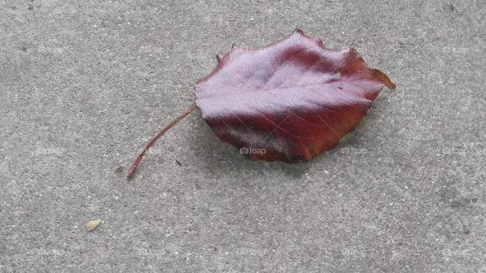 A solitary red leaf on a porch avoiding the snow.