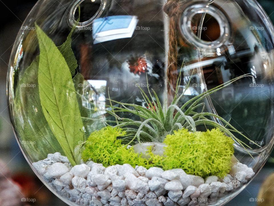 Indoor Topiary Plant Decor