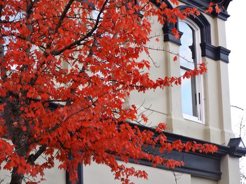 Tree with red leaves