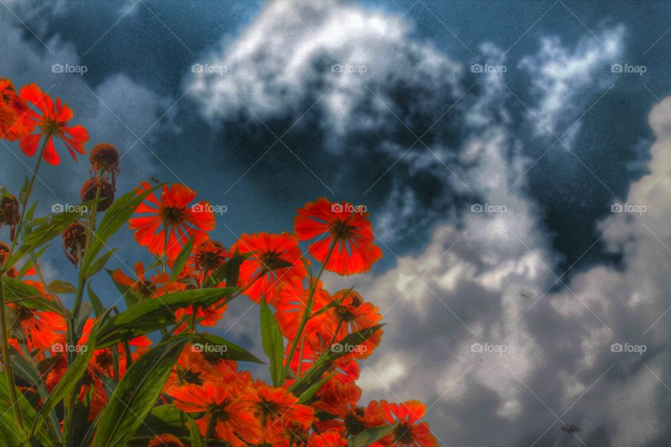 flowers . nature