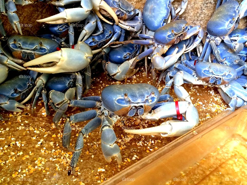 Blue Shells. A bucket of crabs waiting to be sold for food.