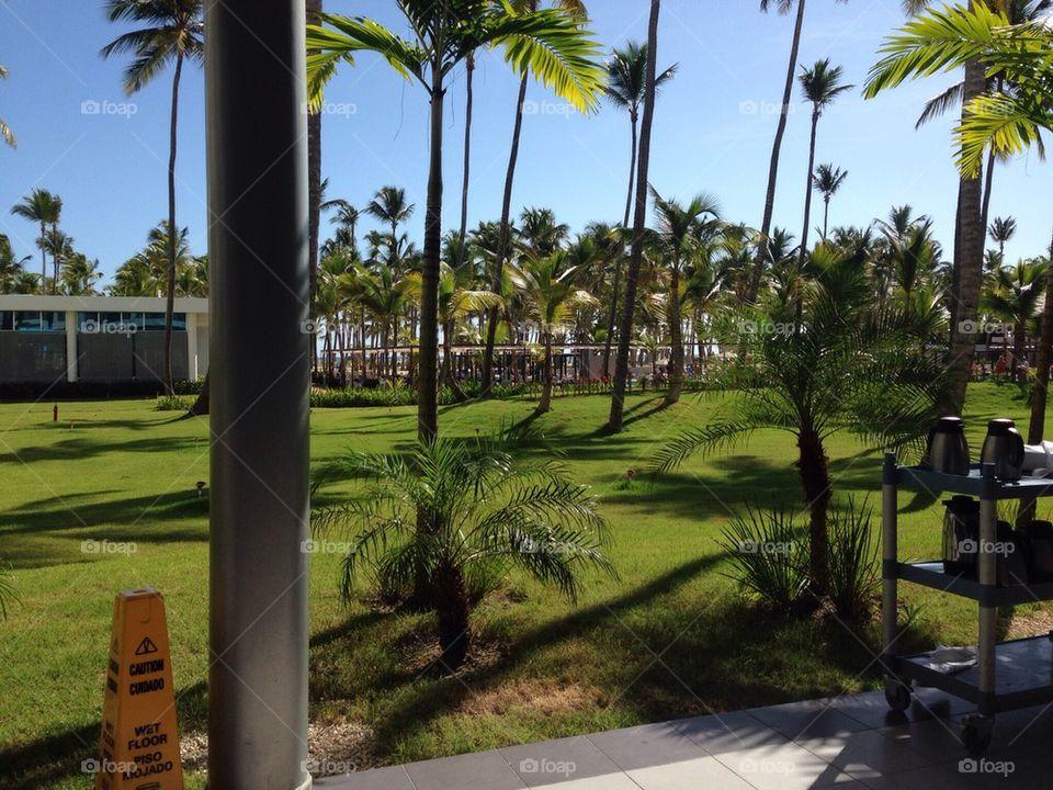 Caribbean ocean palm trees
