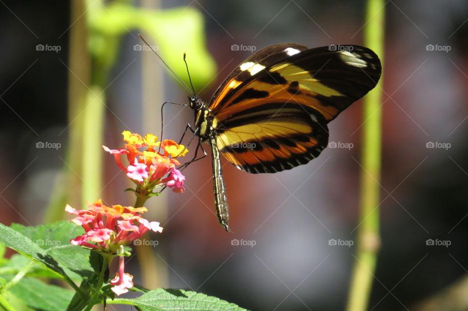 Borboleta no Orquidário em Santos/ Buterfly in Orchid Park in Santos City Brazil.
