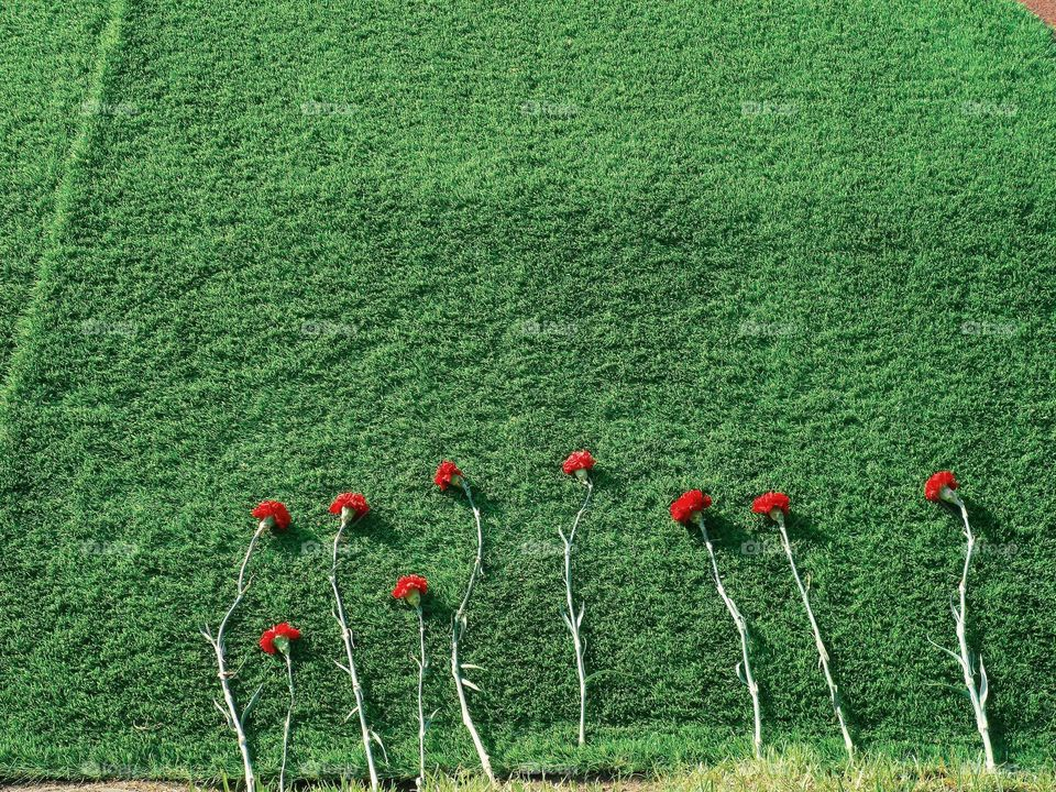 Red carnations on the green grass