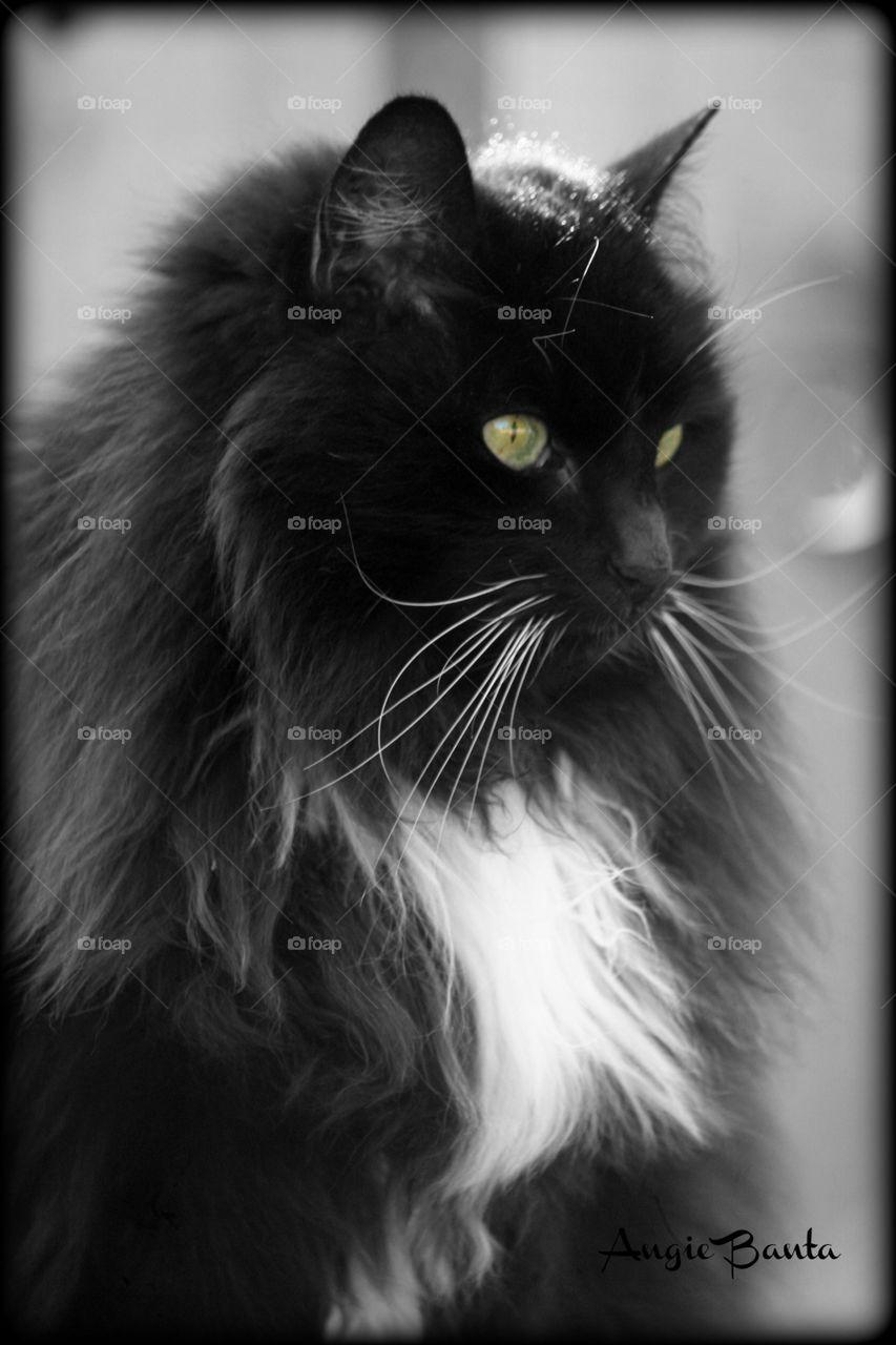 Curious cat staring away