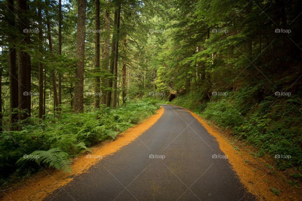 A curving road in forest