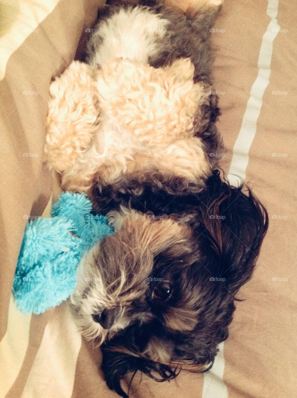 Cute Dog Lazing