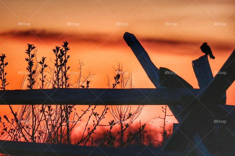 rural sunrise silhouette