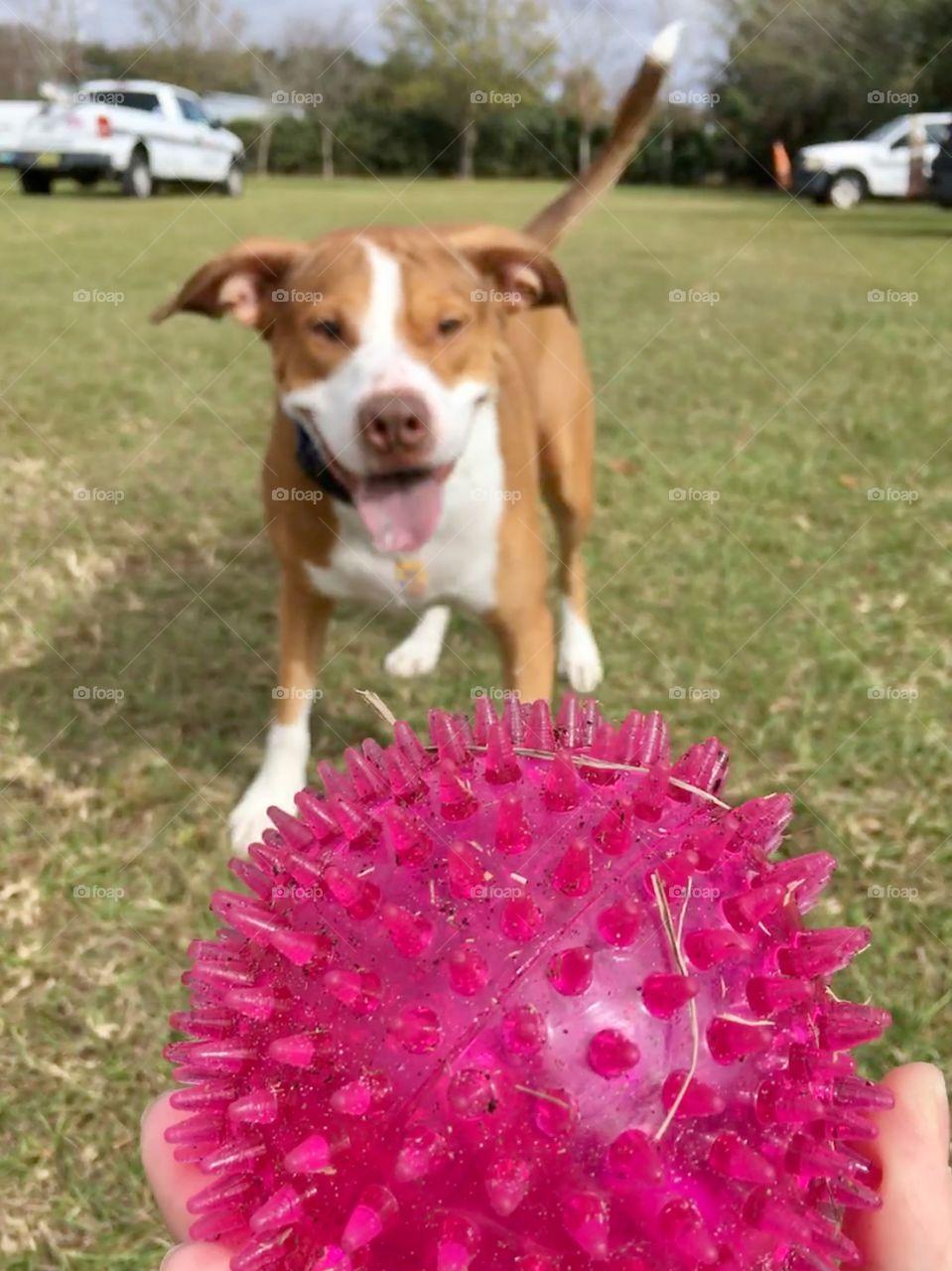 A good dog and his pink ball