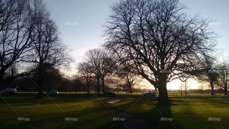 Scenic view of bare trees on grass land