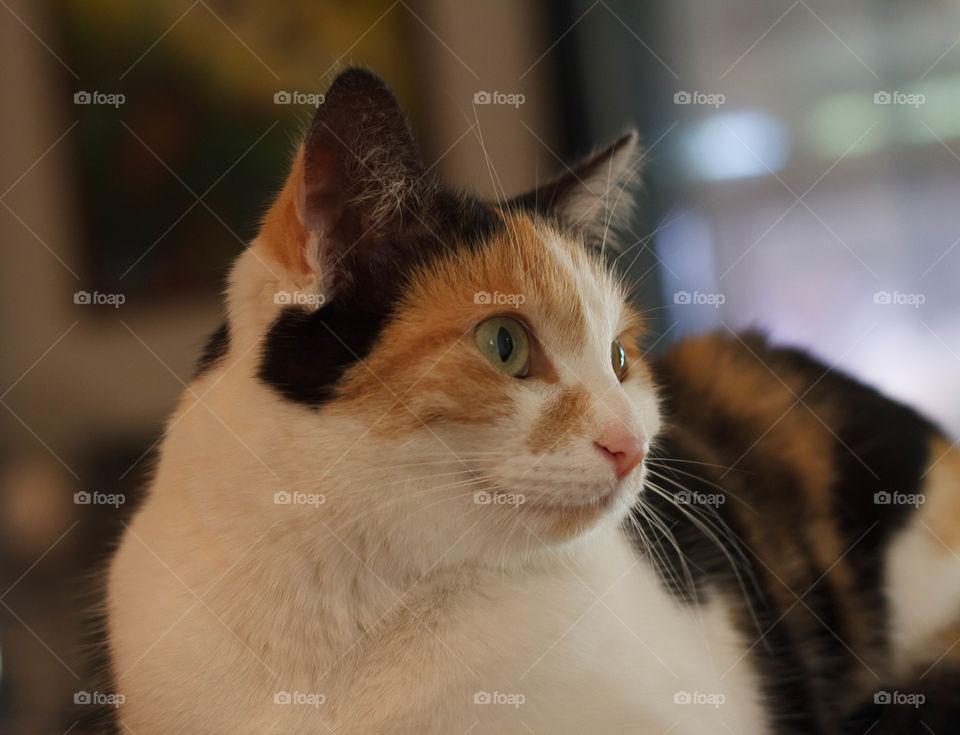Curious Cat Portrait