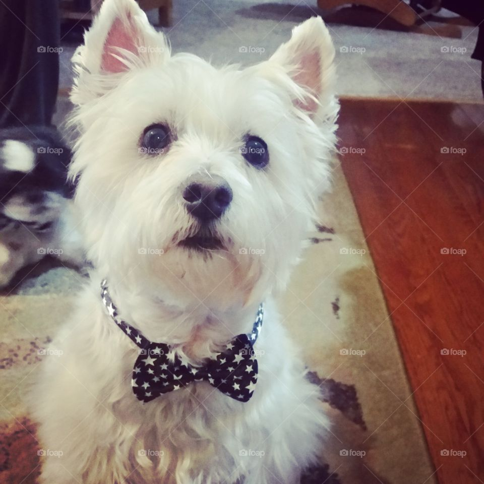 adorableness in a bowtie