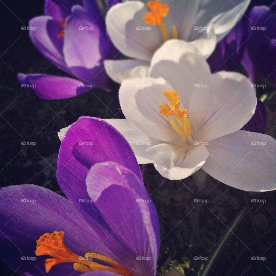 landscape sweden spring flowers by annajensen