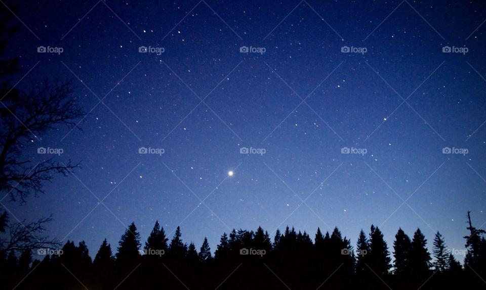 Stars and Treeline. Planet Jupiter
