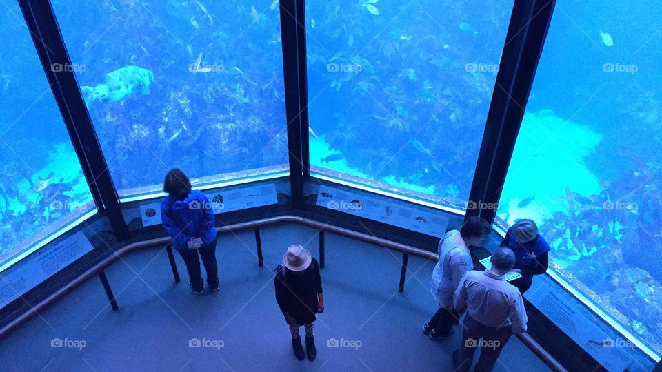 People at the Monterey Bay aquarium California