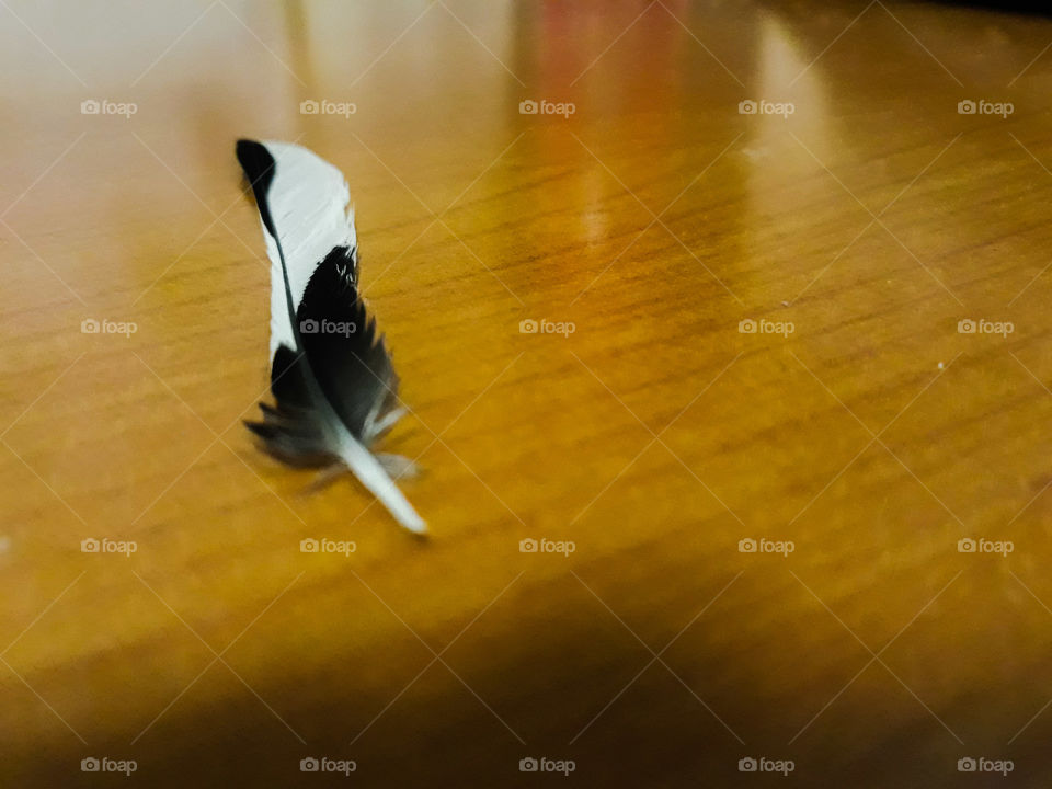 A small white and black feather on a bright wooden background