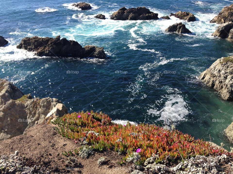 Bodega Head. A whale watching hike along the Pacific coast offered breathtaking panoramas.