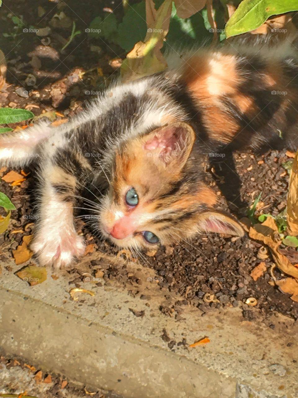 Adorable Small kitten