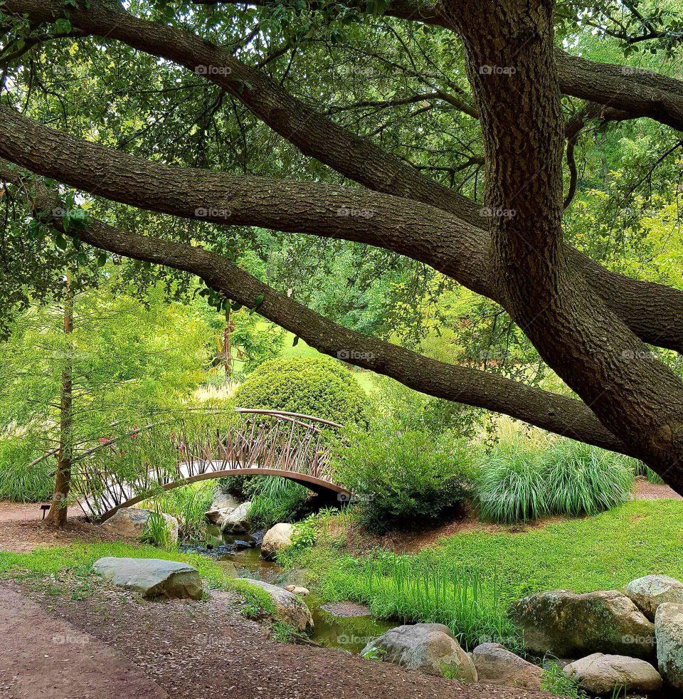 Scenic view of duke gardens in durham north carolina