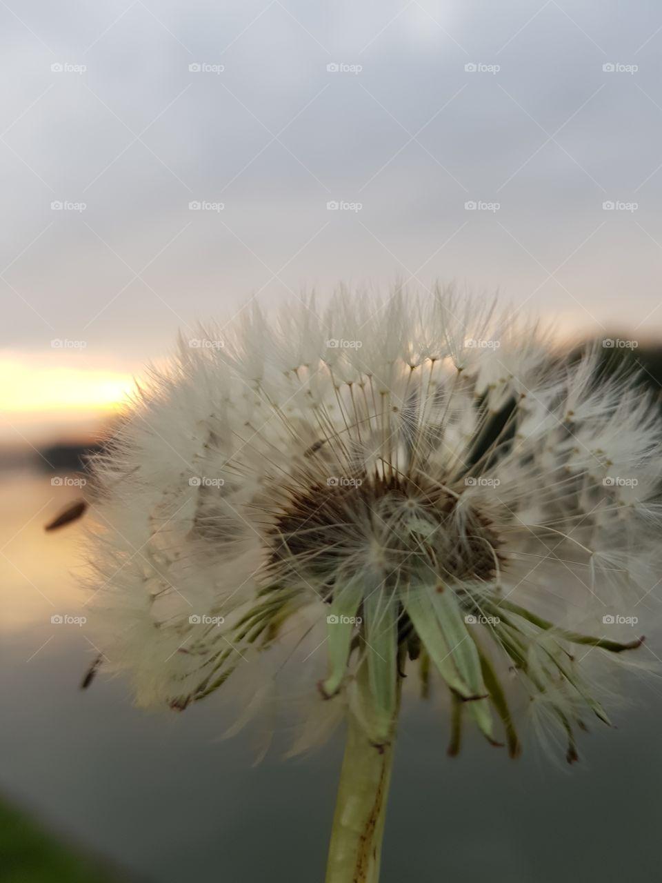 flower behind horizon