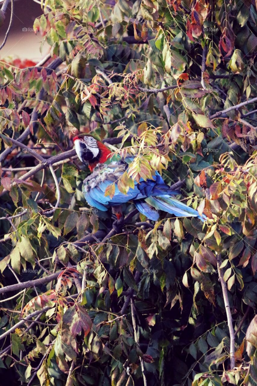 Macaw parrot in tree