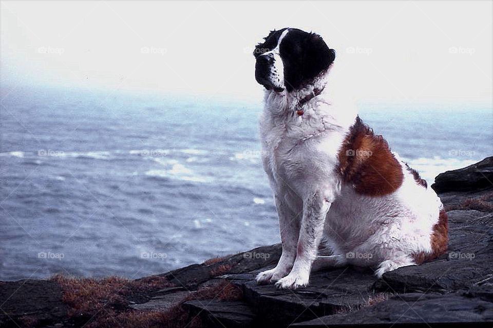 nature dog animal pet by resnikoffdavid