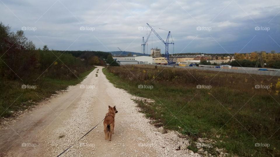 Walking the fox.