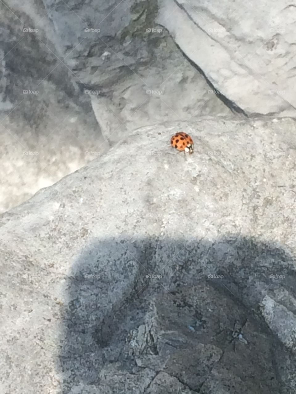Pretty orange and black ladybug walking on a rock during the summer.
