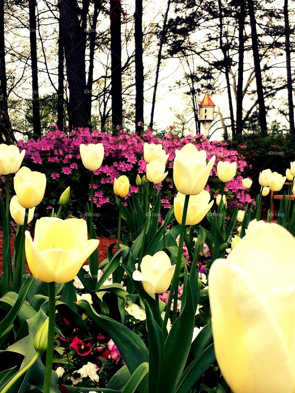 North Carolina Spring