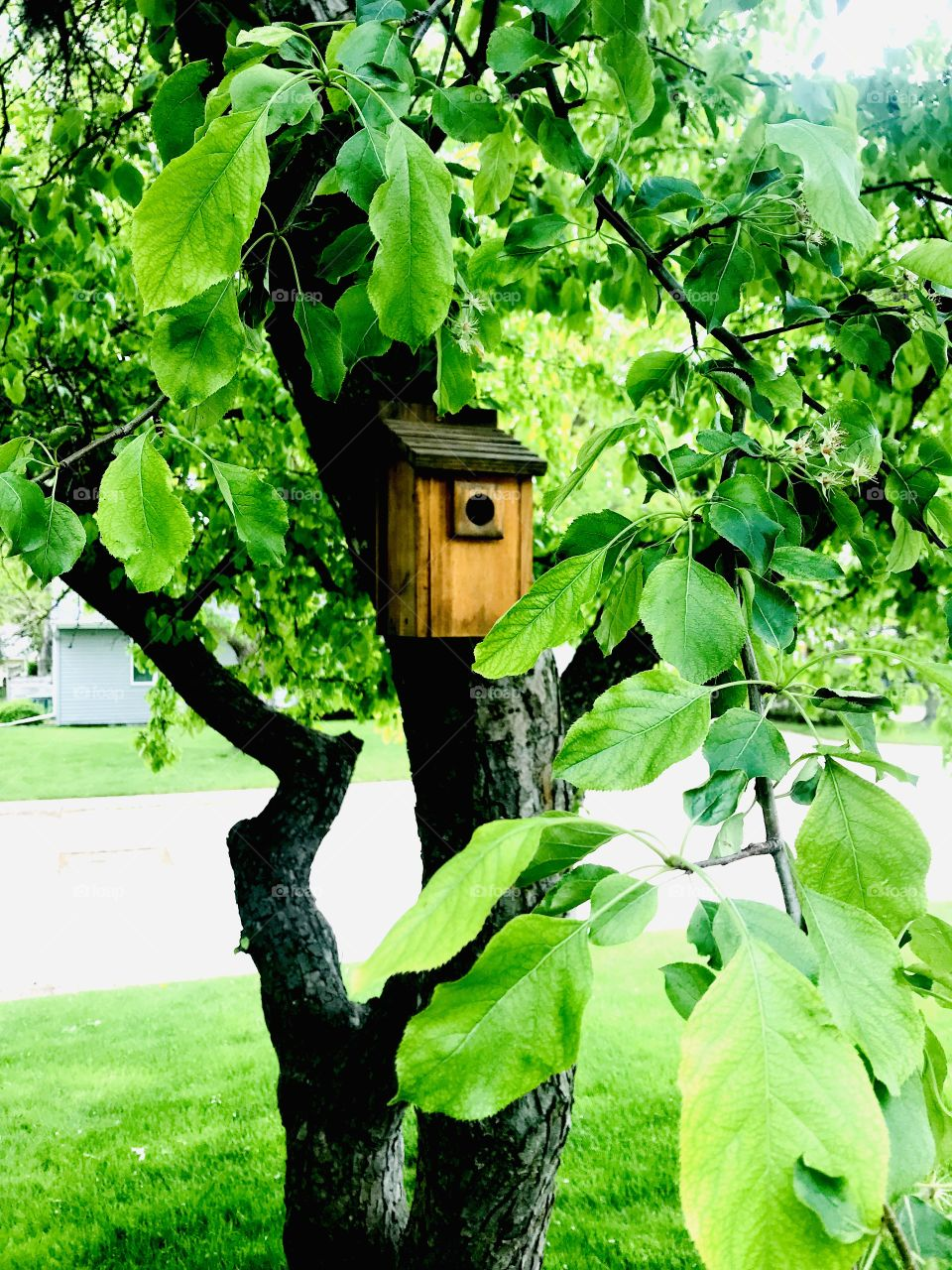 Gorgeous tree and birdhouse from a very well kept garden captured on a beautiful afternoon!