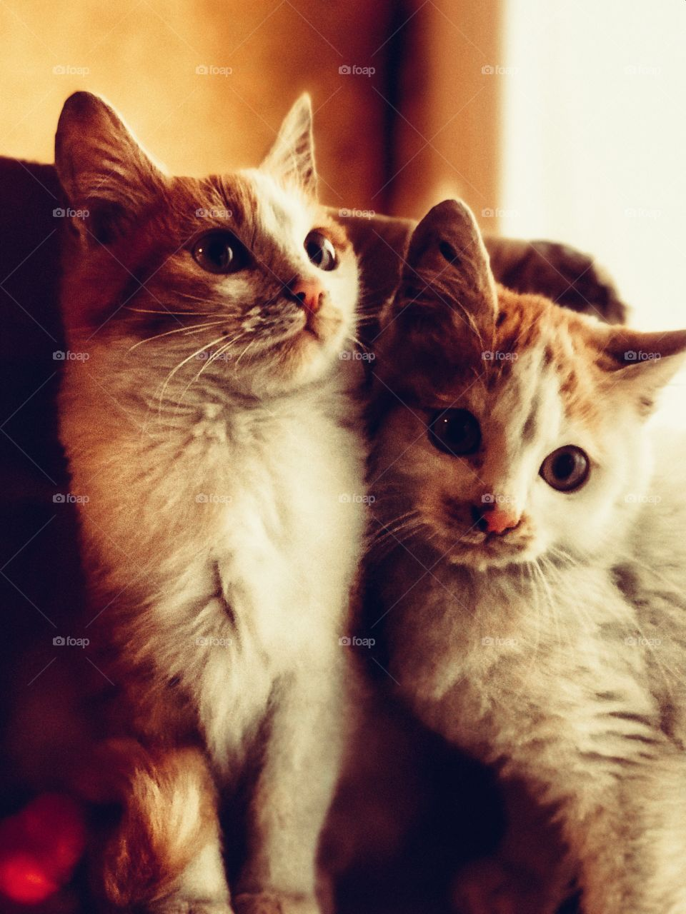 little furs 😻😻