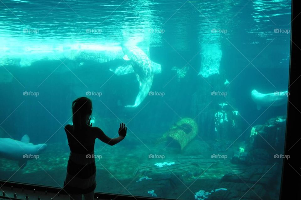 Watching. At the aquarium