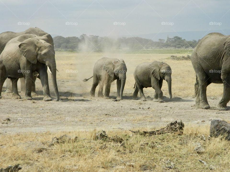 Elephant train in Kenya