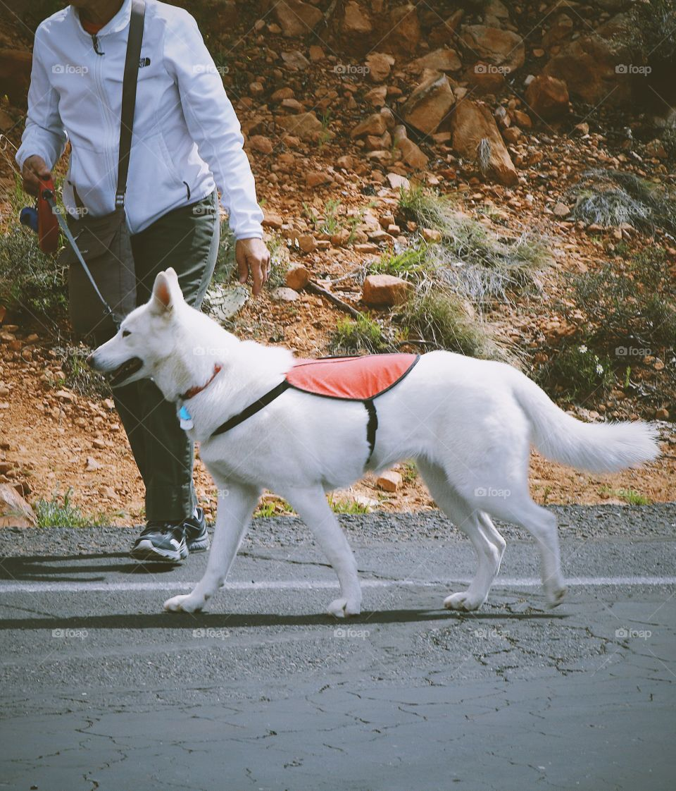 Spring walk with dog