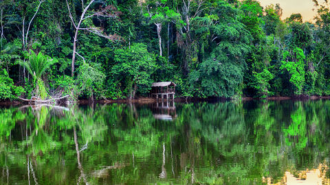 Reflection of green trees in lake