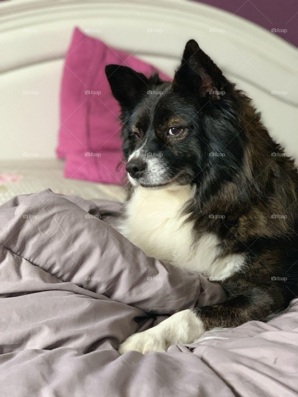 Dog, Mammal, Bed, Pet, Cute