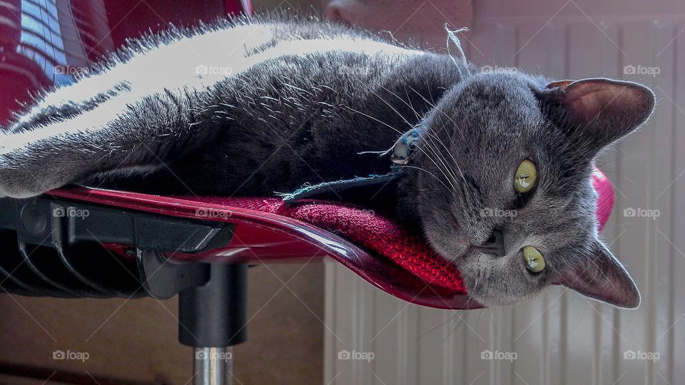 Lazy cat I