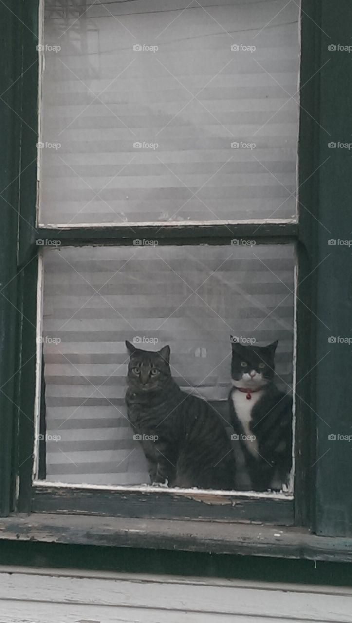 cat brothers