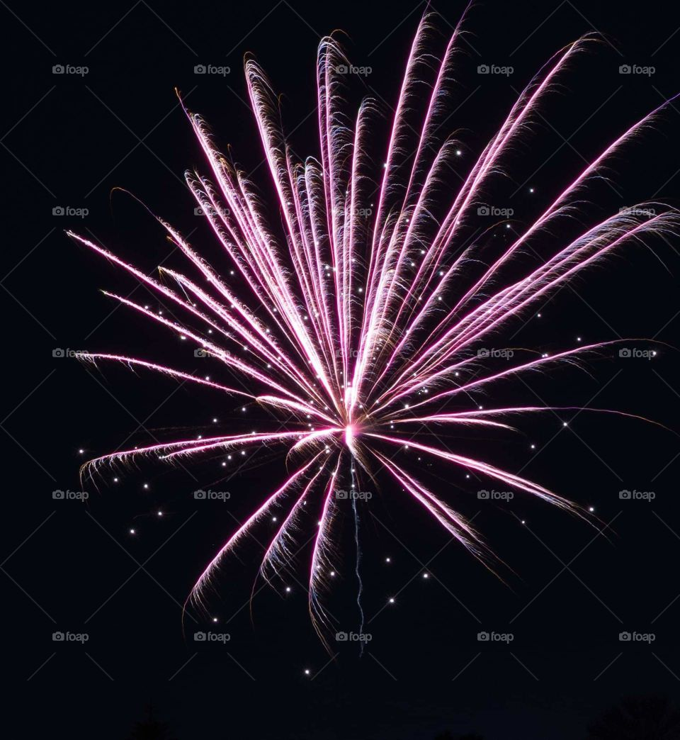 splash of bright pink and white colors as  fireworks burst against a black background