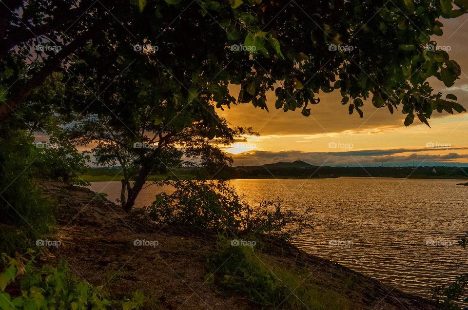 Trees near the lake at sunset