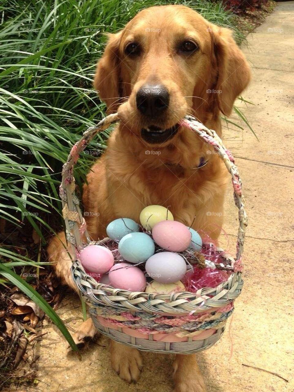 Easter basket dog