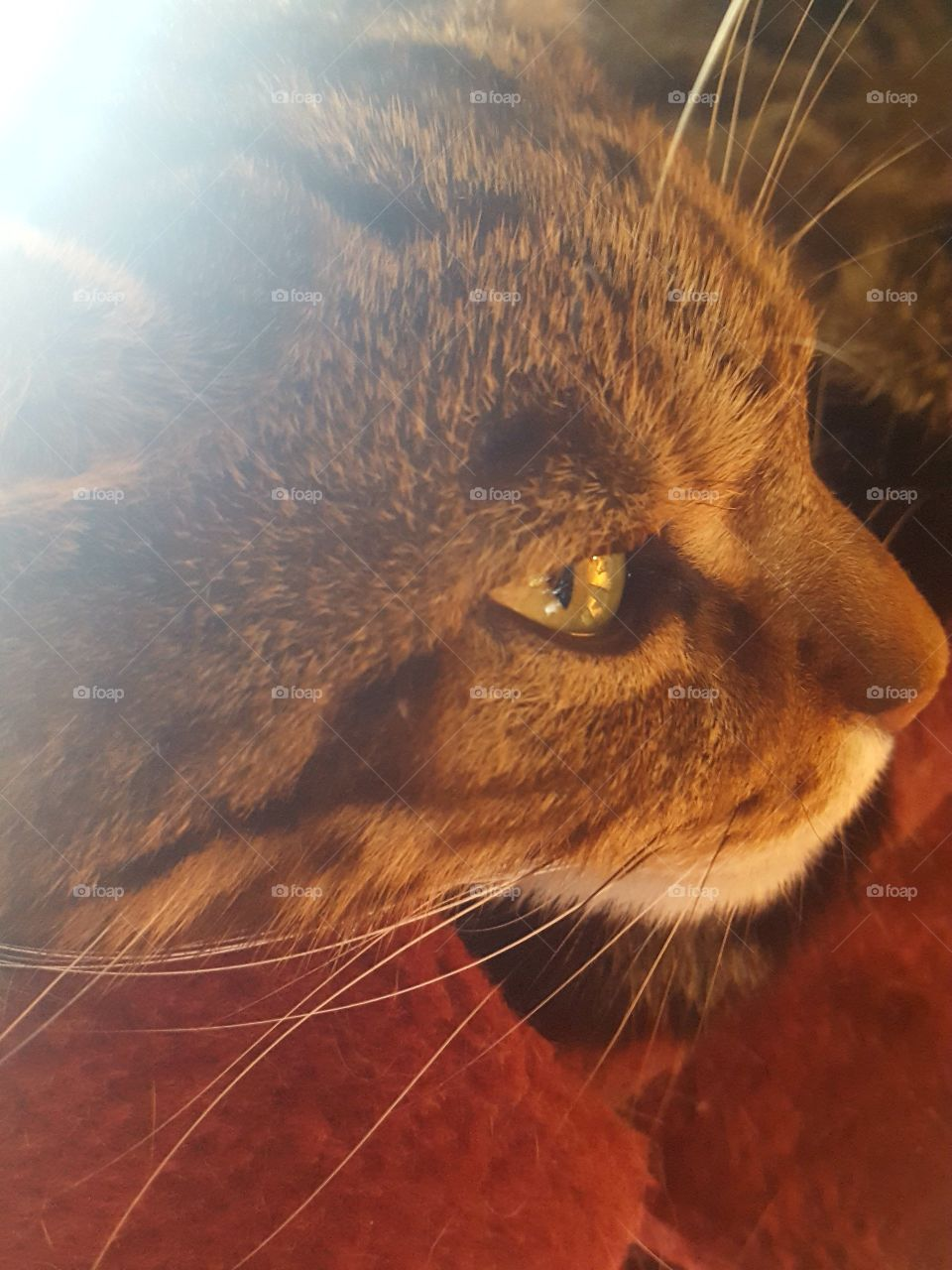 close up of Kitty OwO