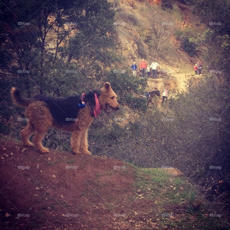 Airedale Adventures