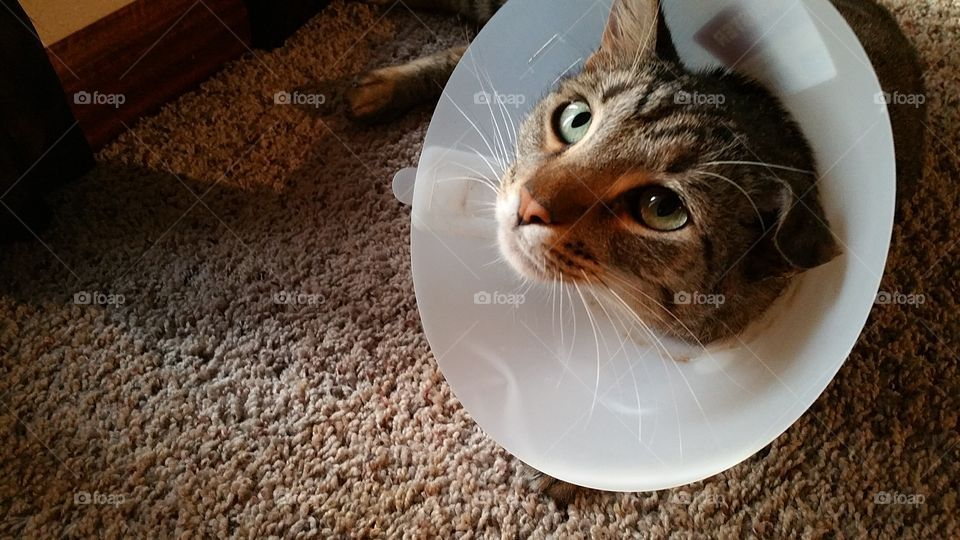 Sad Cat in the Cone of Shame