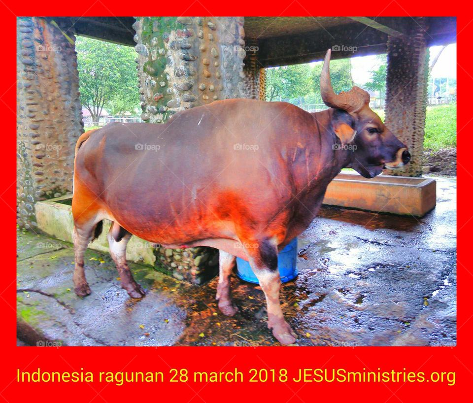 Indonesia ragunan 28 march 2018 JESUSministries.org